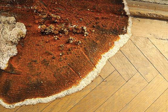 Traitement contre les champignons sur les murs